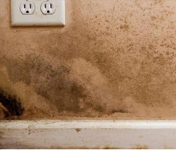 Mold is No Match for SERVPRO of Meridian Before